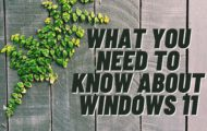 how to rollback to windows 10 from windows 11